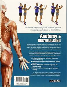Anatomy  U0026 Bodybuilding  A Complete Visual Guide