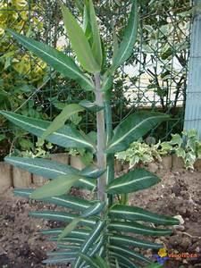 Photo Plante Verte Extrieur