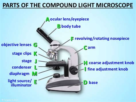 Microscope Quiz Quizlet Eye Diagram Quiz Eye Get Free Image About Wiring Diagram