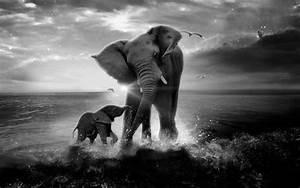 Elephant Black And White Wallpaper Hd   baby   Pinterest ...