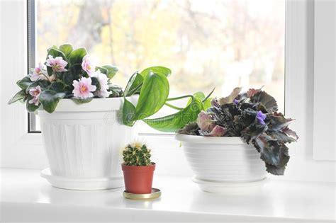 windowsill potted plants