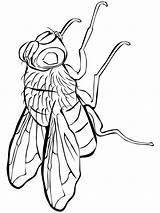 Fly Coloring Printable Fliege Ausmalbilder Animals Ausdrucken Malvorlagen Kostenlos sketch template