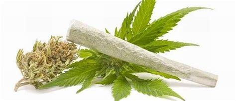 le nouvel obs le cannabis contribue bien 224 soigner le cancer et le bonjour chez vous les