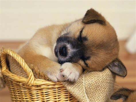 Puppy Dogs Puppiestoo Cute Pinterest