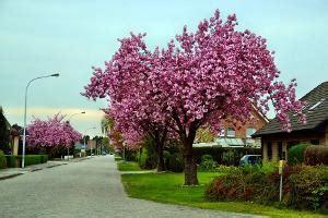Klein Bleibende Bäume by B 228 Ume F 252 R Den Kleinen Garten Markt De