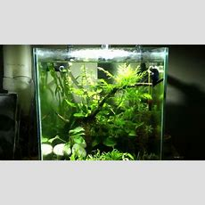 Planted Fluval Chi Update Youtube