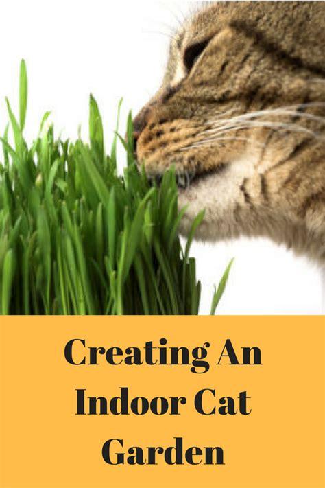 creating an indoor cat garden