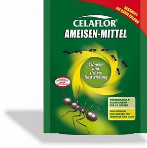 Mittel Gegen Ameisen : ameisen mittel von celaflor ~ Buech-reservation.com Haus und Dekorationen