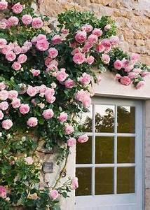 Blumenkästen Bepflanzen Sonnig : pink geraniums blumendeko pinterest balkon blumendeko und balkonbepflanzung ~ Frokenaadalensverden.com Haus und Dekorationen