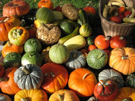 la conservation des r 233 coltes d automne biowallonie