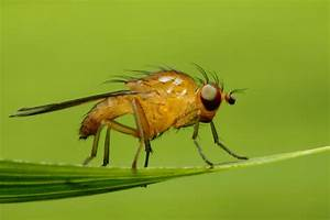 How to deal with an indoor fruit fly infestation for Gnat infestation in bathroom