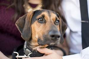 Engaging Tails: Luna the Black & Tan Coon Hound Mix ...