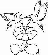 Hummingbird Coloring Pages Printable Hummingbirds sketch template