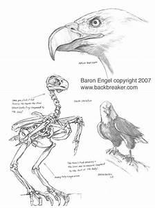 bald eagle anatomy bing images With bald eagle diagram
