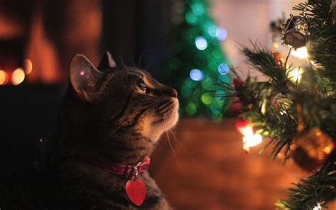 cat first seen christmas tree how to cat proof your tree