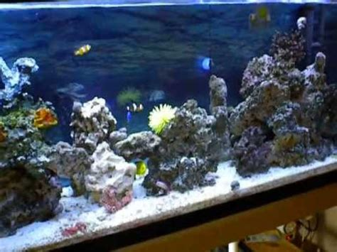 All Marine All Aquarium by Ultra Clear Saltwater Marine Aquarium With Home Made Filter April 2013