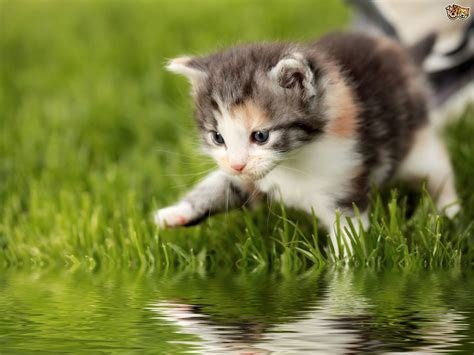 cat water why do cats water so much pets4homes