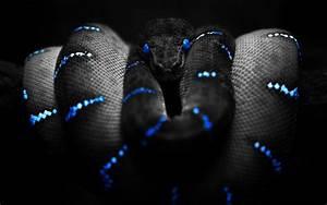 wallpaper screen: Photoshop Snake High Definition Wallpapers
