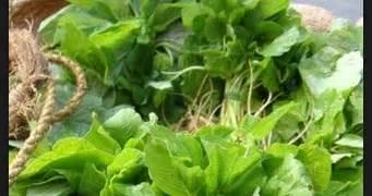 sejarah biologi pengertian definisi tanaman baya m