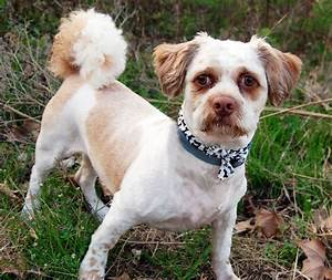 Chuchi, Another Dog With A Human Face, Looks Like Steve ...