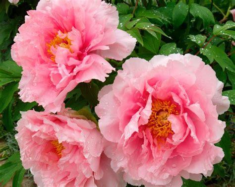 type of flowers flower types