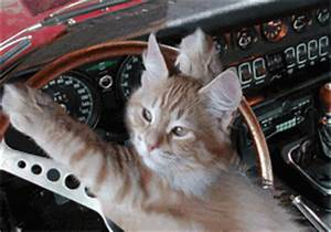 Sleepy Kitten GIFs - Find & Share on GIPHY