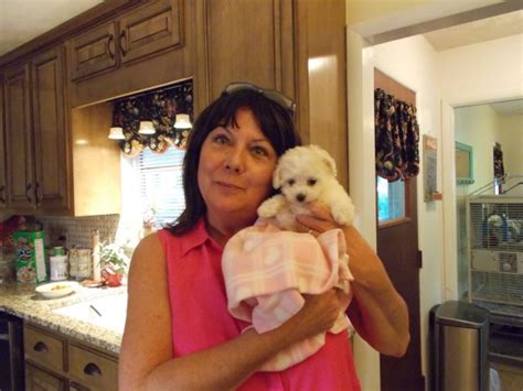 proud owners lowry toy poodles
