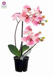 Künstliche Orchideen Im Topf : k nstliche orchidee im topf rosa 36 cm ~ Watch28wear.com Haus und Dekorationen