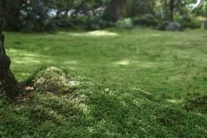 Moos Im Rasen Kalk : kalkstickstoff gegen moos im rasen so verwenden sie es richtig ~ A.2002-acura-tl-radio.info Haus und Dekorationen