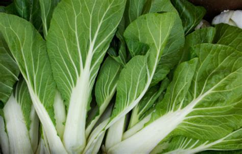 The cruciferous vegetable belongs to the mustard family along with cabbage, turnips, broccoli, and kale. Beets - Warner Farm