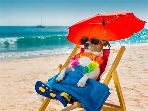 dog siesta  beach chair stock image image  summer
