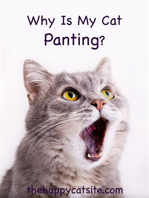cat panting with mouth open after playing