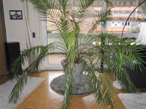 Palmen Für Innen by Pflanzen B 228 Ume Str 228 Ucher Pflanzen Garten Gebraucht