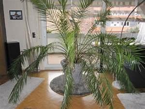 Pflanzen Für Innen : palme f r innen in mannheim pflanzen kaufen und ~ Michelbontemps.com Haus und Dekorationen