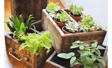 pots pour plantes d interieur des id 233 es pour arranger ses plantes d int 233 rieur trendy mood