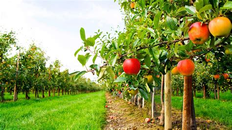 arboriculture  farming christian farmers federation