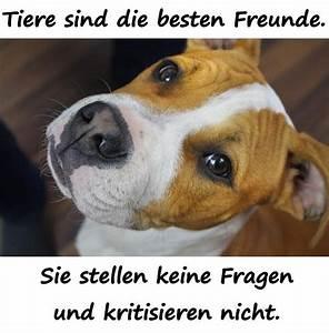 Welche Töpfe Sind Die Besten : zitate spr che memes deutsch debeste lustig witze ~ Michelbontemps.com Haus und Dekorationen