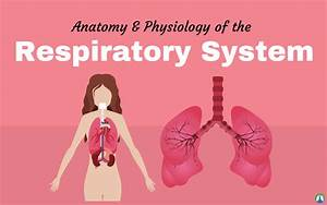 Bestseller  Anatomy And Physiology Study Guide Answer Key