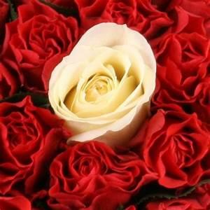 1 Rote Rose Bedeutung : 10 20 30 40 50 60 70 80 90 100 rosen online sie w hlen farbe anzahl schnittrosen online ~ Whattoseeinmadrid.com Haus und Dekorationen