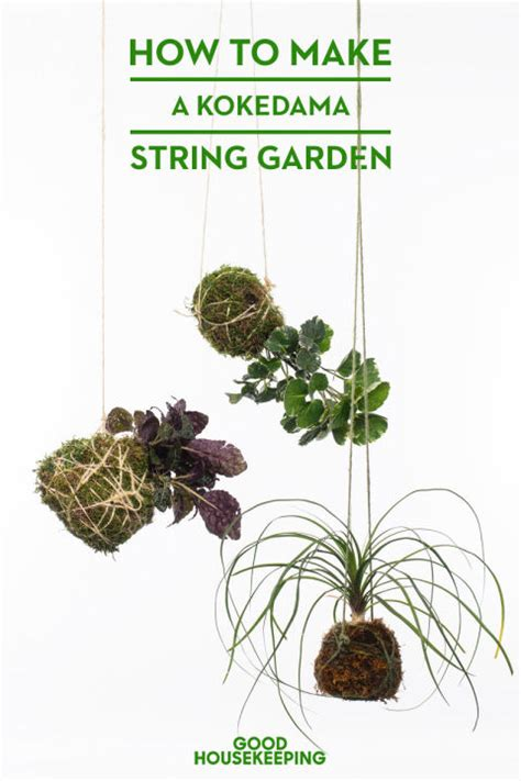 how to make a hanging l how to make a kokedama hanging garden