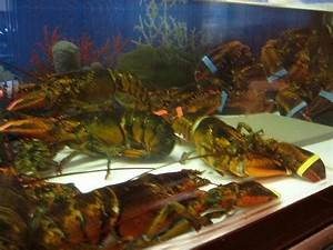 Lobster Tank Guide   TradeWind Chillers