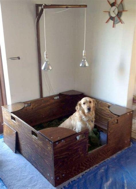 dog whelping  paperblog