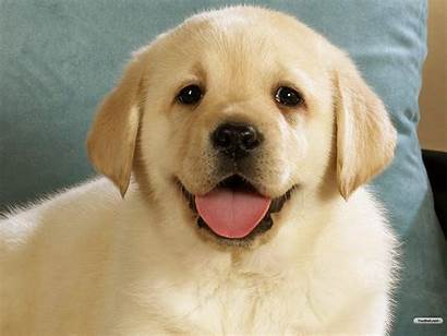 Wallpapers Dog Dogs Puppies Puppy Pets Adorable