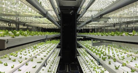 seedstock future  food urban ag field tripucla