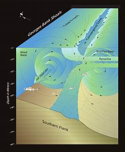 Ecology Of The Northeast U S  Continental Shelf