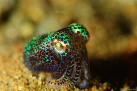 bioluminescence 9 glowing sea creatures travel tripbase