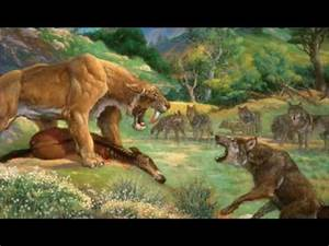 Saber Tooth Tiger Vs Wolf | www.pixshark.com - Images ...