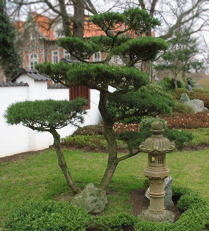 Japanischer Garten In Bad Langensalza by Bonsai Im Japanischer Garten In Bad Langensalza Japanese