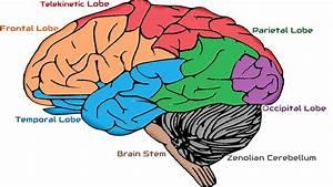 Zenolian Brain