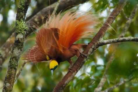 birds  types   mystical birds